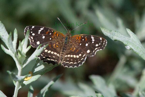 Cochise Stonghold, Arizona April 2015