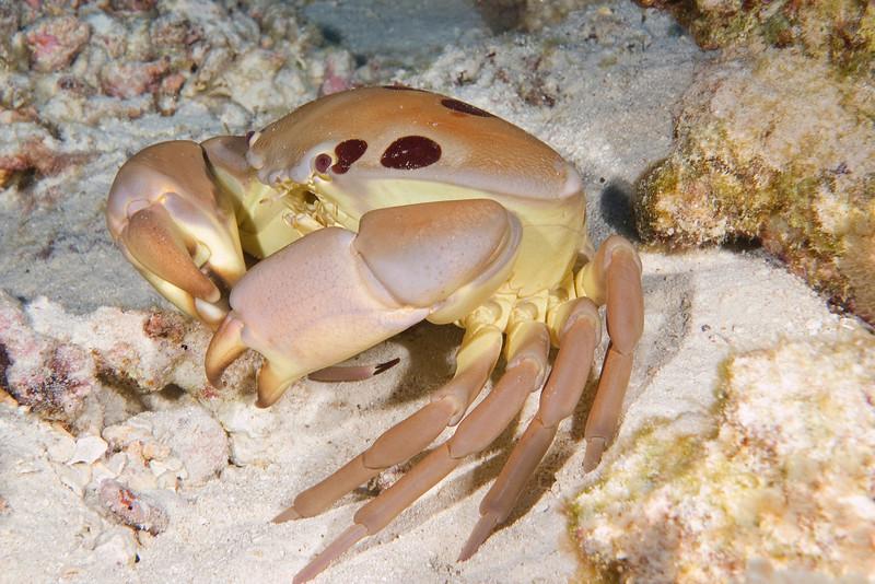 7-11 Crab.jpg