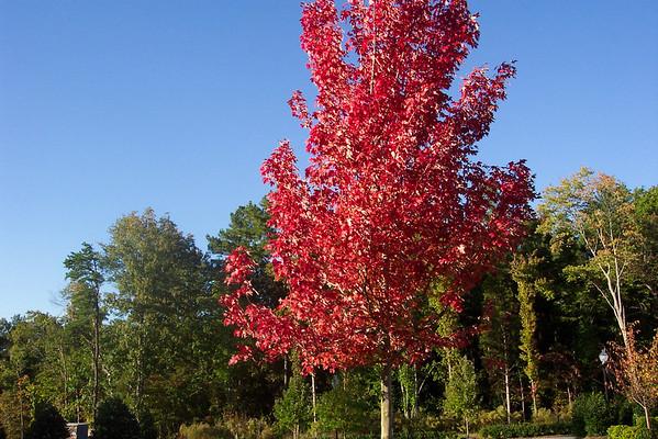 Outdoor at Arringdon - Durham, NC