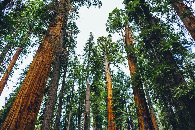 Rui in Sequoia-07140.jpg