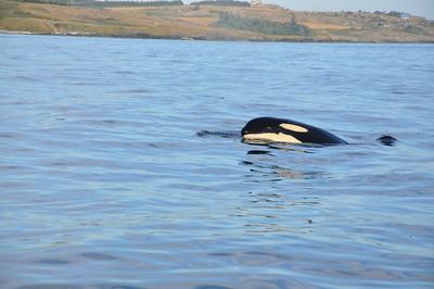 2012/07 San Juan Island Trip