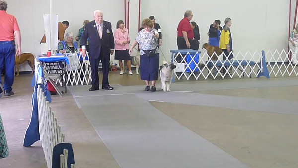 2014-05-11 SUN Denton Dog Show =VIDEO ONLY=