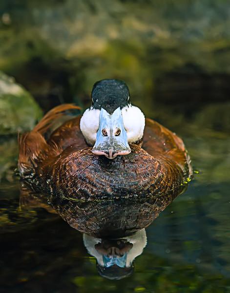 Duck_1035.jpg