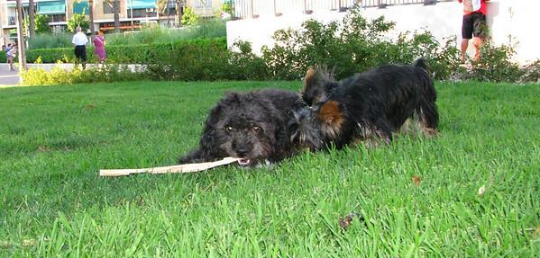 06  -  21  -  2010 Ayora Dog Park
