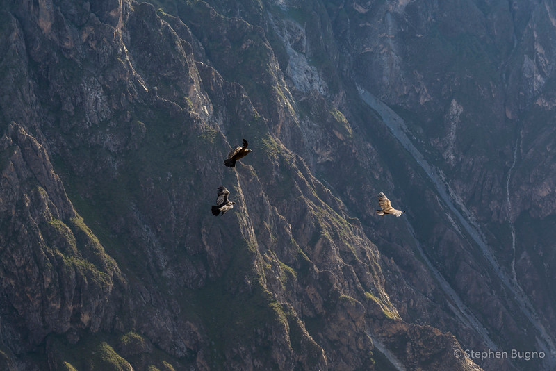 Colca Canyon-1246.jpg