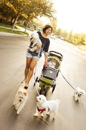 Six Dog Family