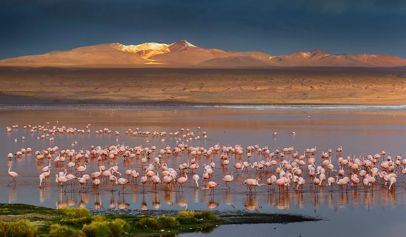 Laguna-flamingo-web.jpg