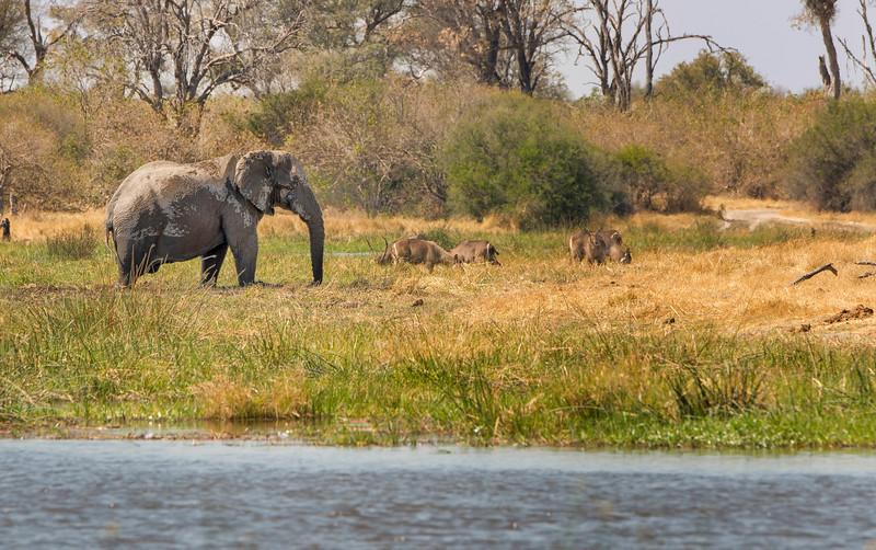2014-08Aug-Okavango Masters-39-Edit.jpg