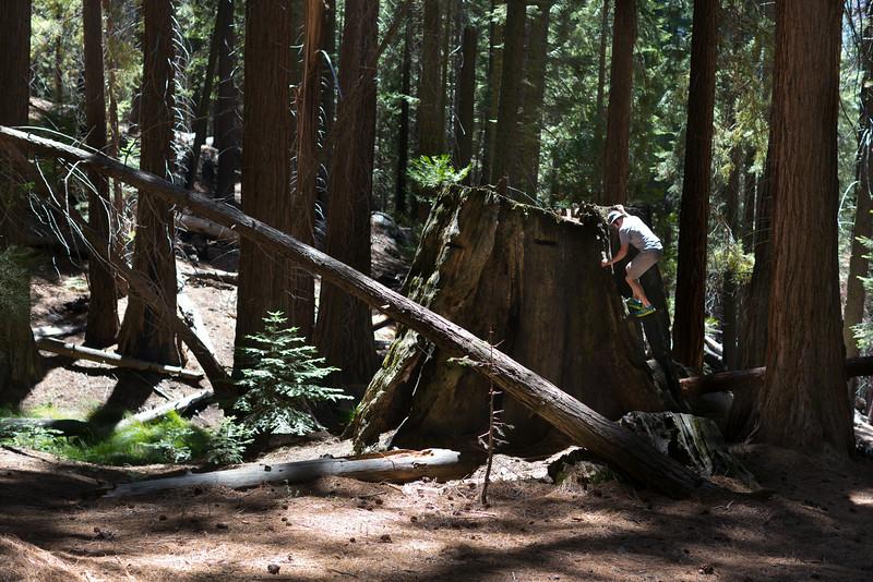 Sequoia_0169.jpg