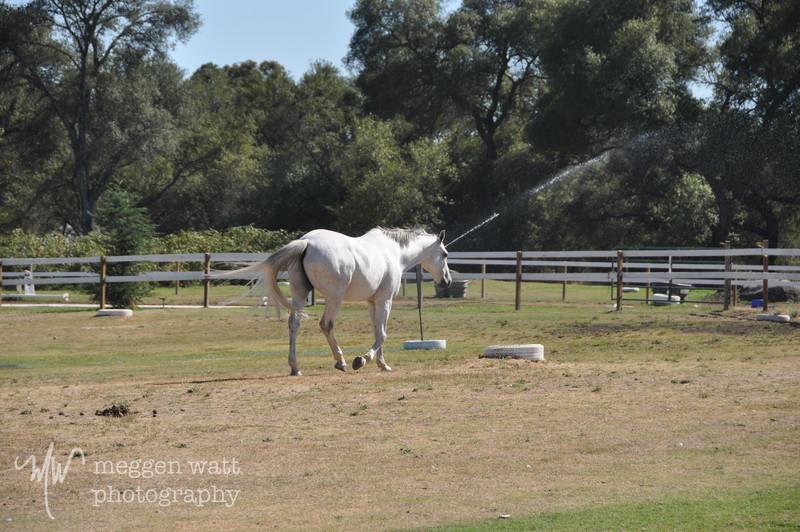 EB&Horses-118.jpg