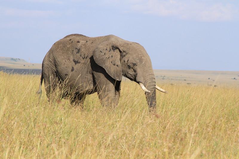 Kenya Part2 '15 024.JPG