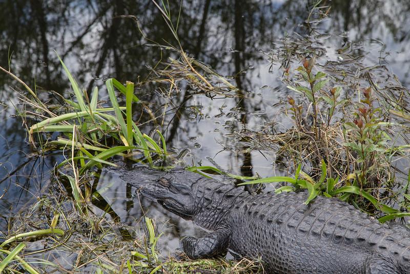 Everglades NP-0349-Select_E.jpg