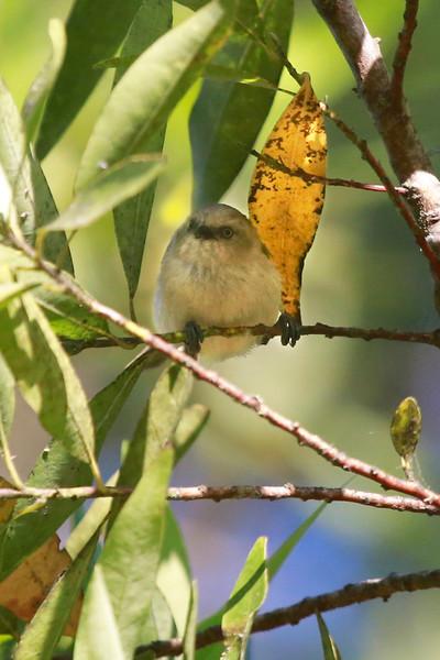 Mendocino Wildlife June 2015