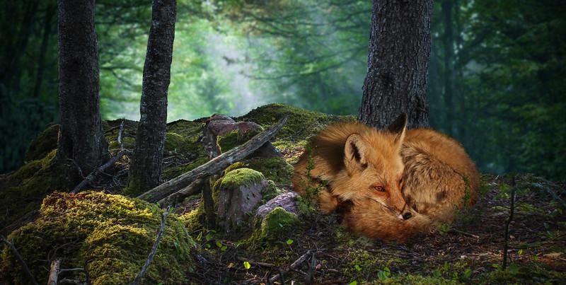 wood-fox.jpg