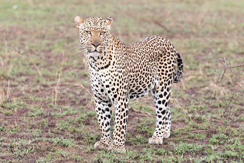 Africa - 101616 - 5641.jpg