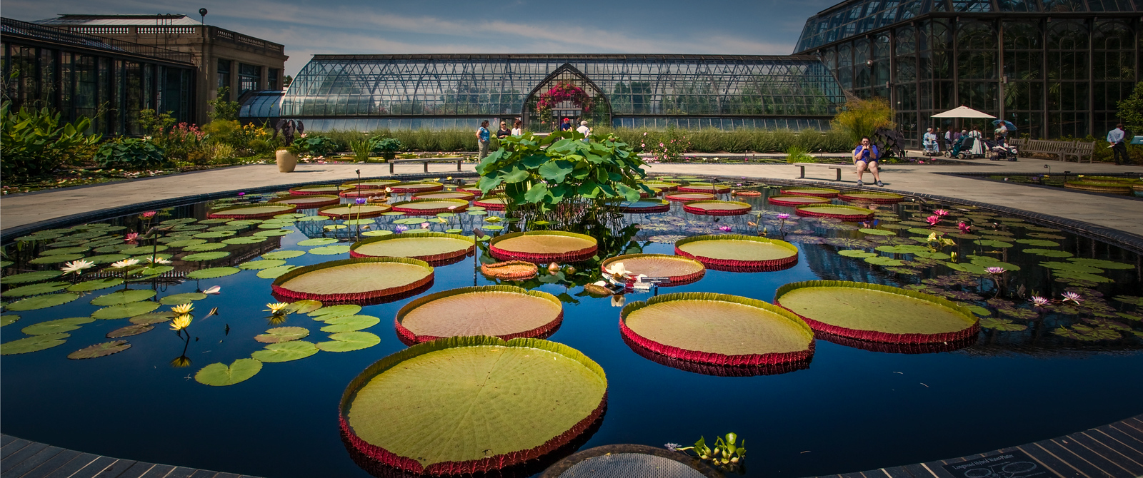 长木公园的莲花池,百去不厌