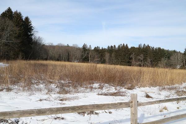 A Winter Meadow  1-3-18