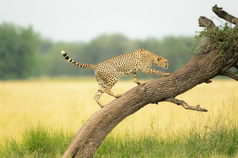 20160211_0053_Serengeti_Day3.jpg