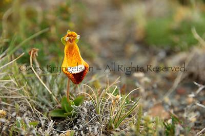 Patagonia Flora