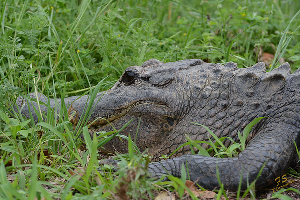 Aransas National Wildlife Refuge