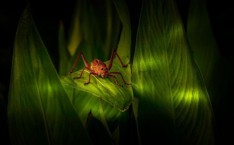 Bugs and Beetles - 171.jpg