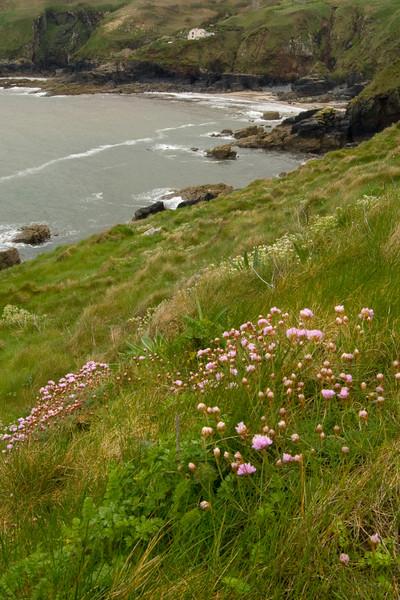 flower on cliff.jpg