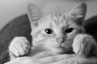 Tabitha's kittens 2012