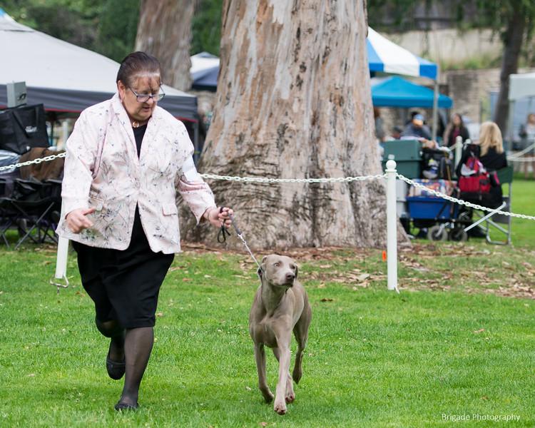 2019 Pasadena Kennel Club-8159.jpg