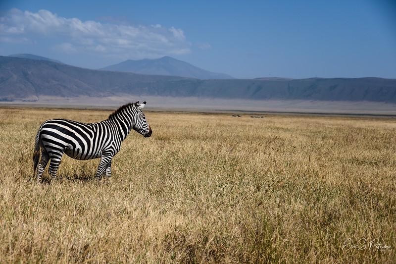 Tanzania 2019-4078.jpg