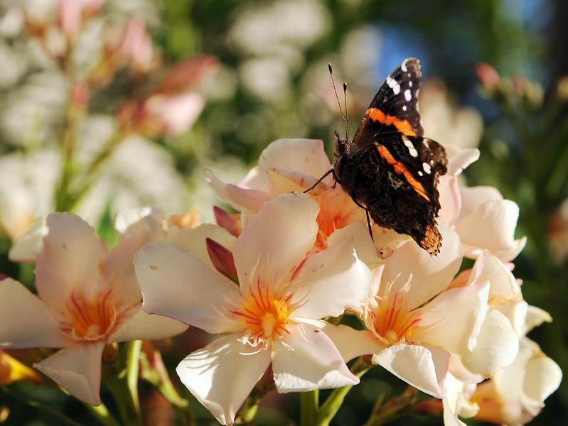 20111128_Nature_104.jpg