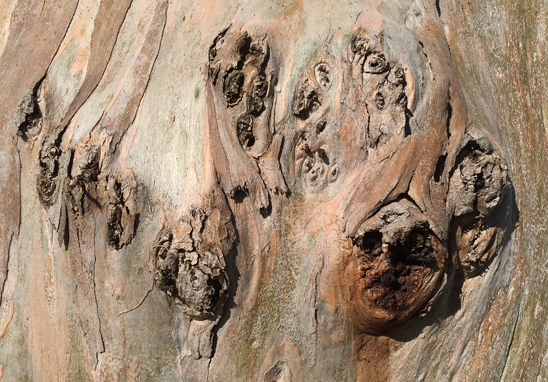 tree faces.jpg