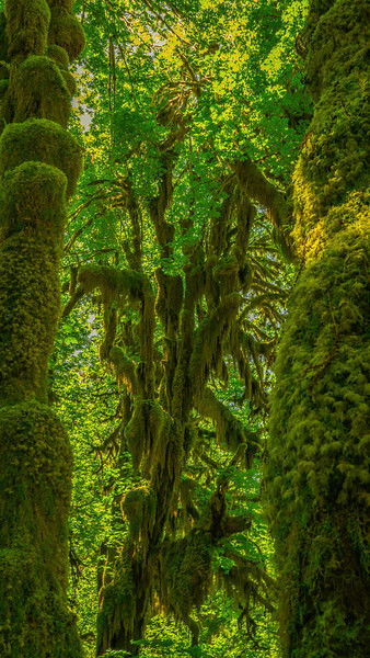 Branches of Green