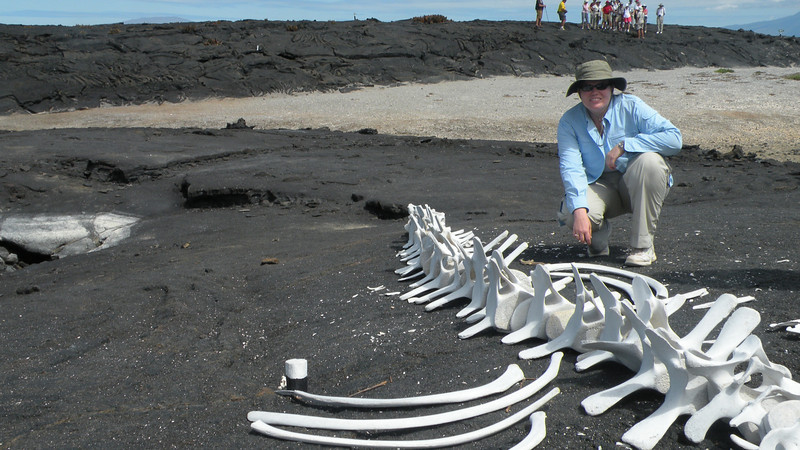 Galapagos2 600.JPG