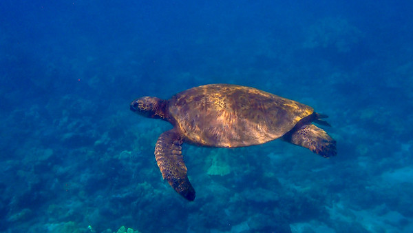 Day 5: Snorkeling At Molokini Crater and Wailea Point With Pacific Whale Foundation