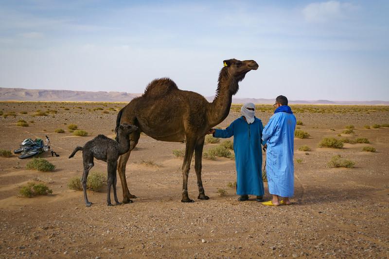 Morocco March April 2017-03465.jpg