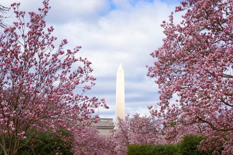 magnoliatreesmonument.jpg