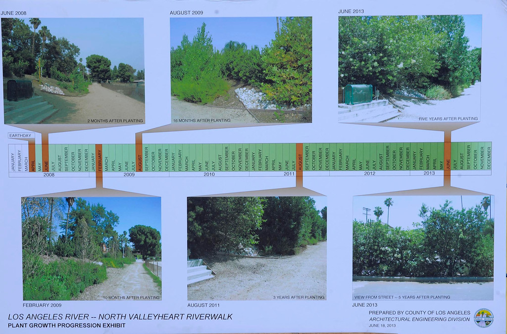 . This series of photos shows changes that occured next to the LA River between June 2008 and today. LA County Supervisor Zev Yaroslavsky joined the Village Gardeners of the Los Angeles River as they broke ground for North Valleyheart Riverwalk project. The plan is to beautify and improve the ½ mile concrete channel that boarders Valleyheart Drive between Fulton and Coldwater Canyon Avenues. Studio City, CA. 7/13/2013(John McCoy/LA Daily News)