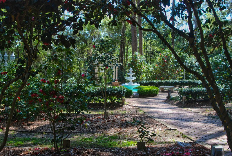 Camellia Gardens at Dorothy Oven Park