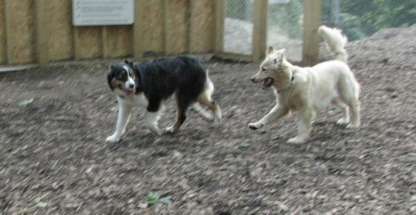 Hazel (pup), OLIVER
