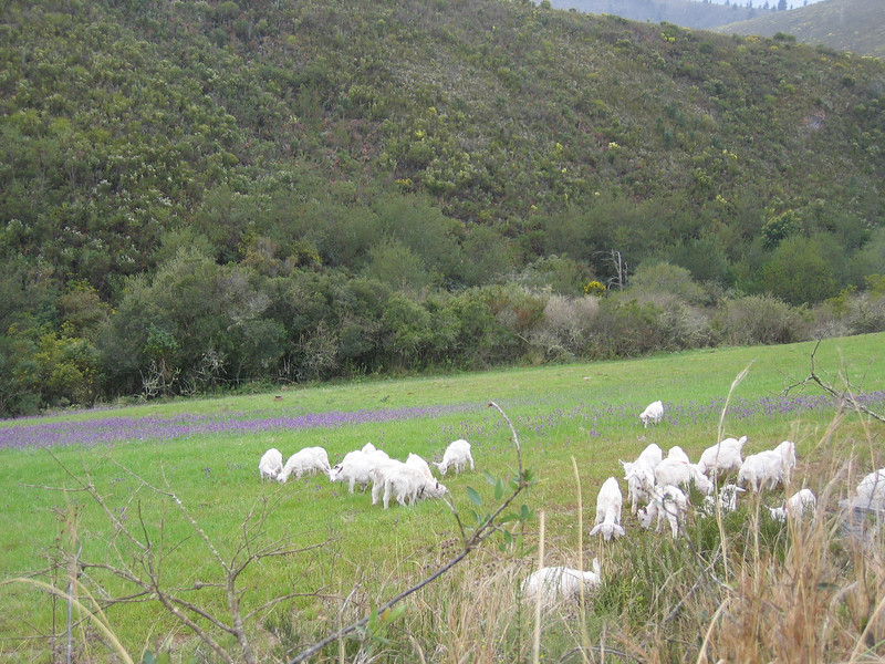 D7 ride down Prince Alfred Pass 4.JPG