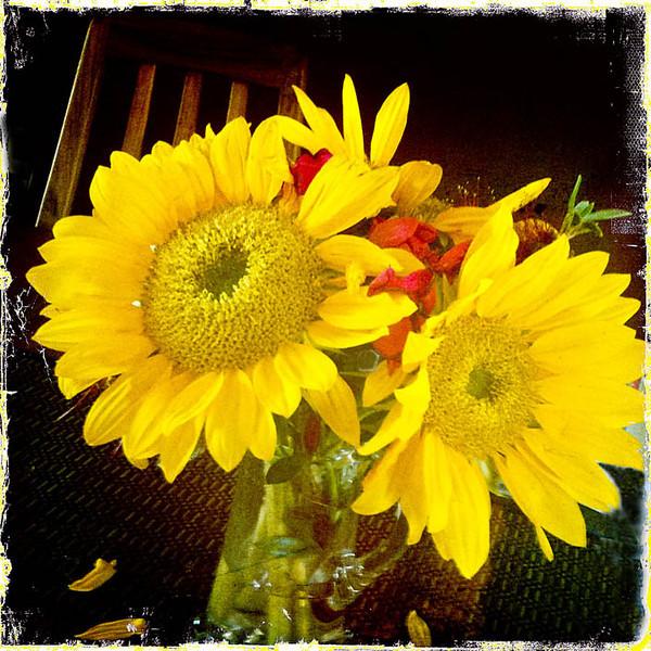 WEB  Sunflowers Hipsta  copy.jpg
