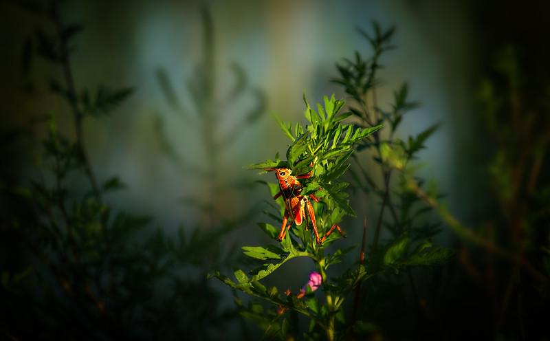 Grasshoppers 7.jpg