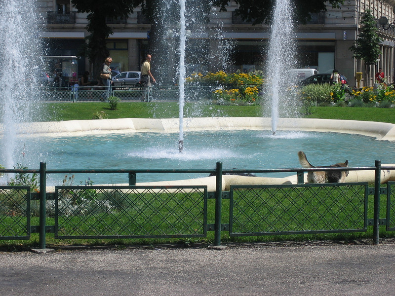 Dogs in the fountain. Location - Grenoble