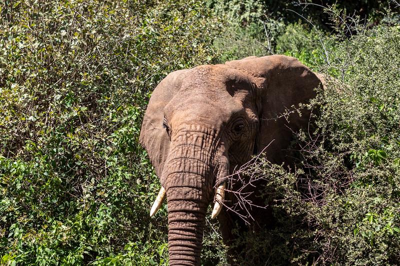 Africa 19 Jpegs_36.JPG