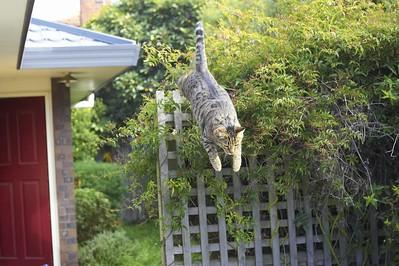 Tauren mistimes a jump
