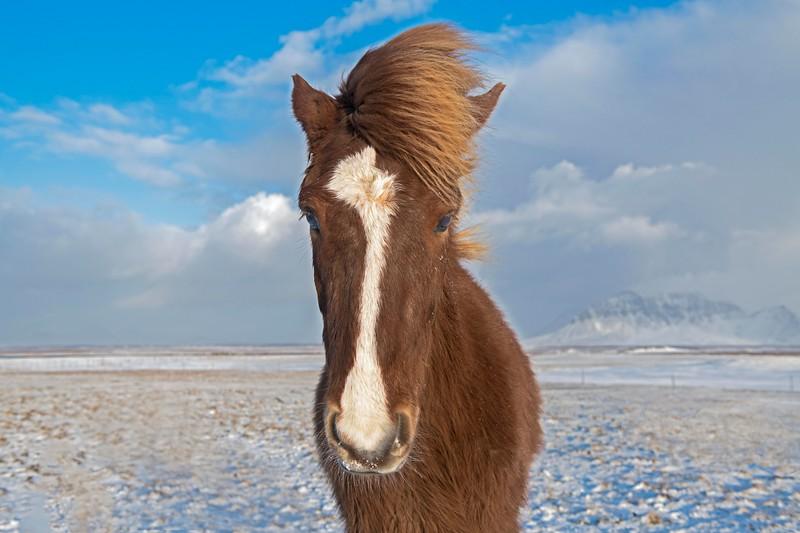 Horses_Iceland-19.jpg