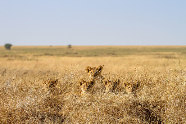 Serengeti, Ngorongoro Crater & surrounds