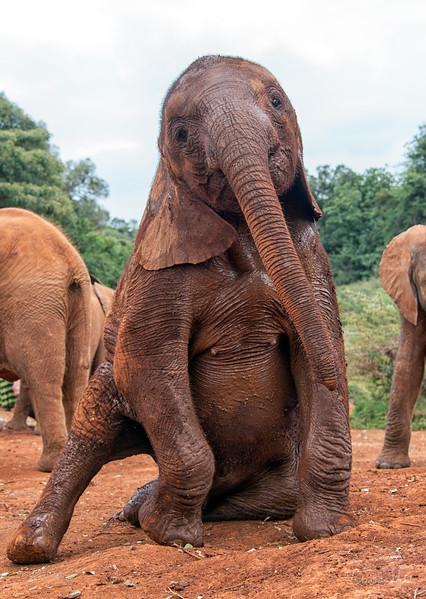 Aug312013_nairobi_blixen_elephant_2349.jpg