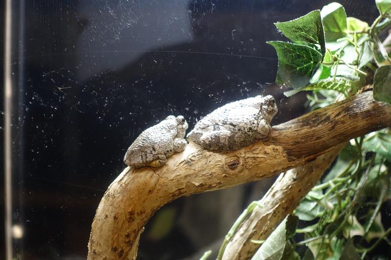 bumpy toads