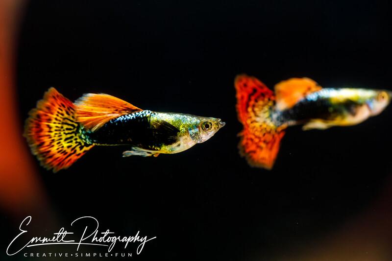 20200208-Fish-9.jpg